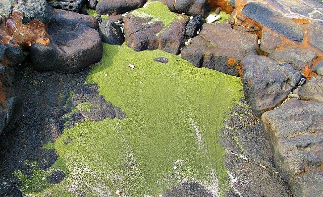 Olivine crystals make green sand
