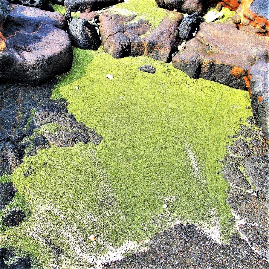 Pockets of olivine along the shoreline near Papakolea green sand beach