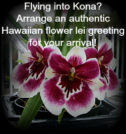 Arrive in style by arranging for a beautiful flower lei greeting
