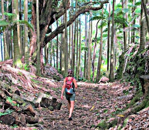 You will love hiking the Big Island!