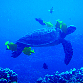 Scuba Diving Big Island Hawaii