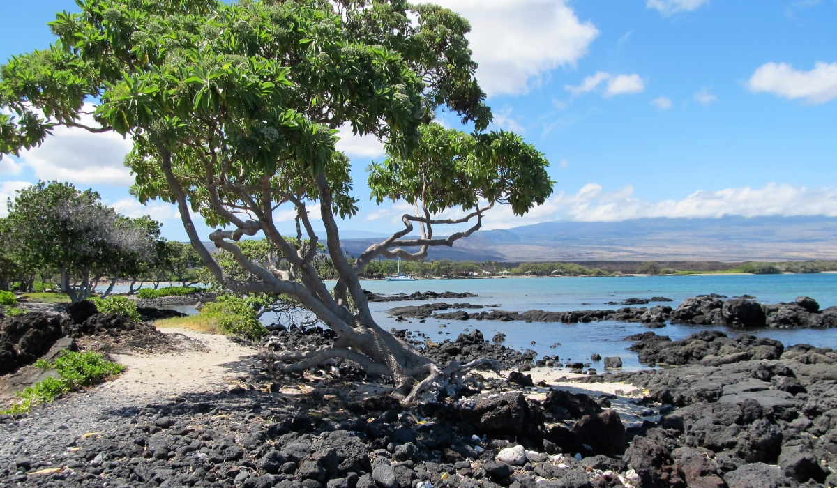 Ala Kahakai Trail by the Sea