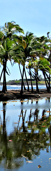 Punalu'u - The black sands beach