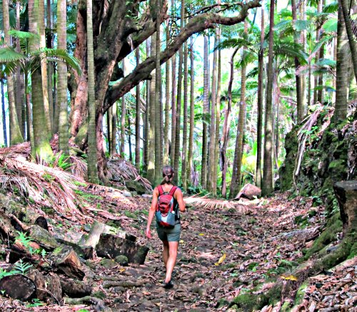 You will love hiking the Big Island!