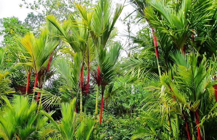 Pana'ewa Rainforest Zoo and Gardens