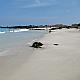 Manini'owali Beach at Kua Bay
