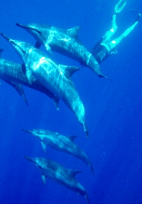 Hawaii teen adventure snorkeling with dolphins