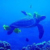 Scuba Diving Big Island Hawaii