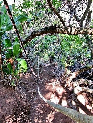 Honokane Nui trail