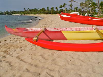 Green sea turtles past the canoes