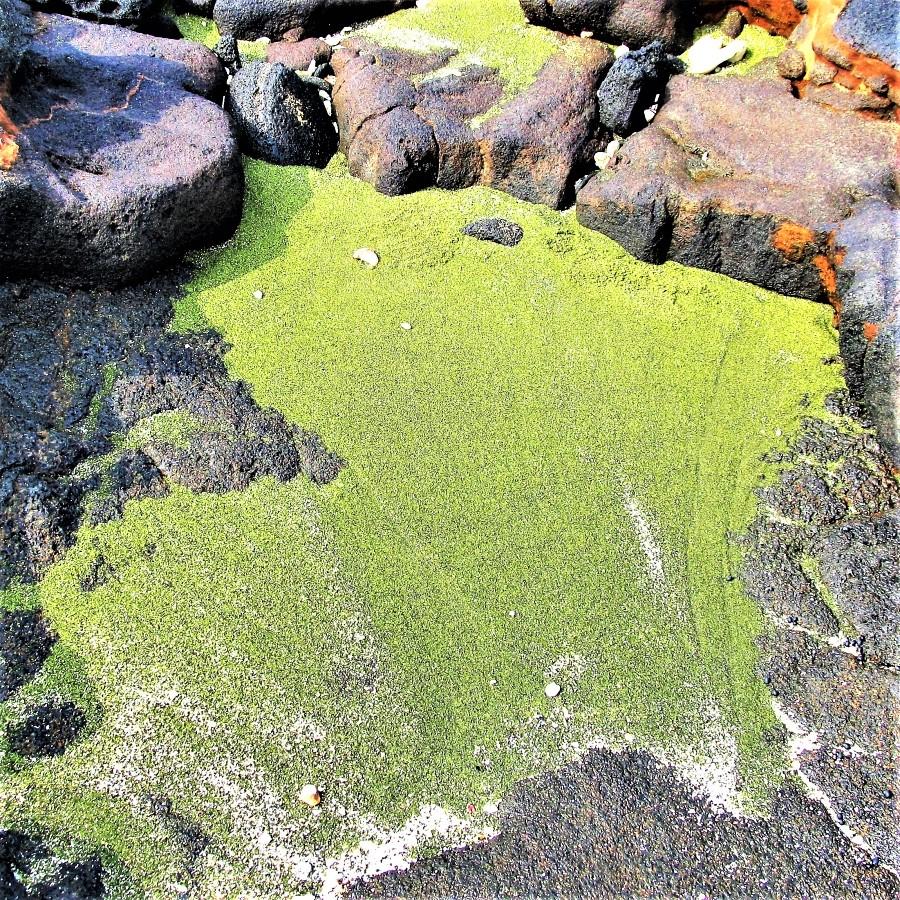 Pockets of olivine along the shoreline near Papakolea green sand beach