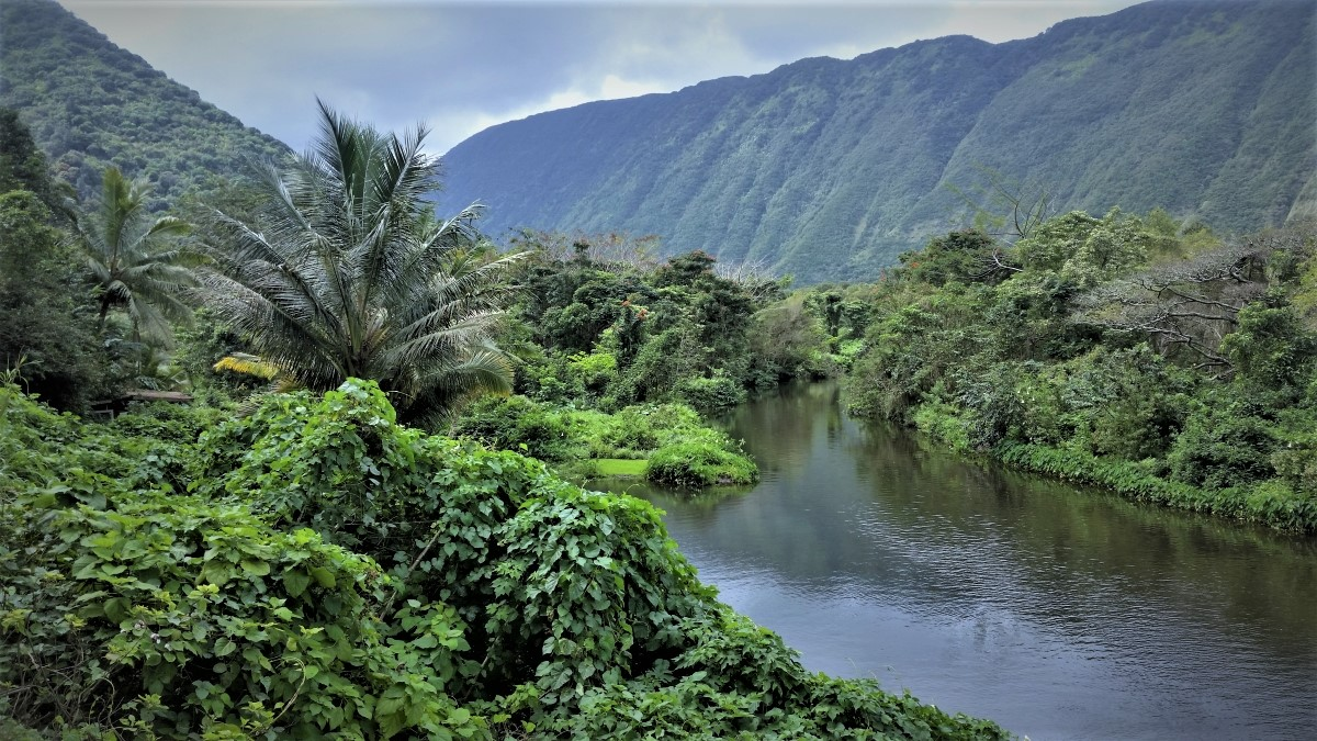 Waipi'o Valley stream